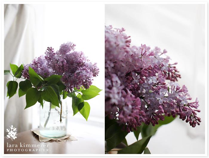 Lilacs_2011