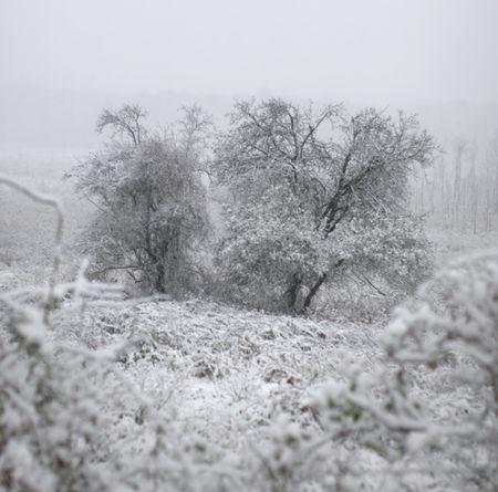 NJ_October_Snow
